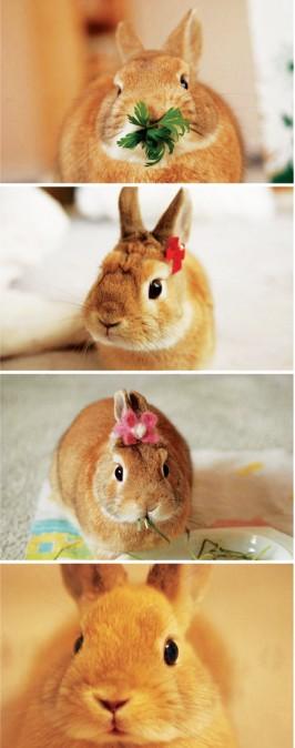 这只被称为史上最萌小小兔来自美国