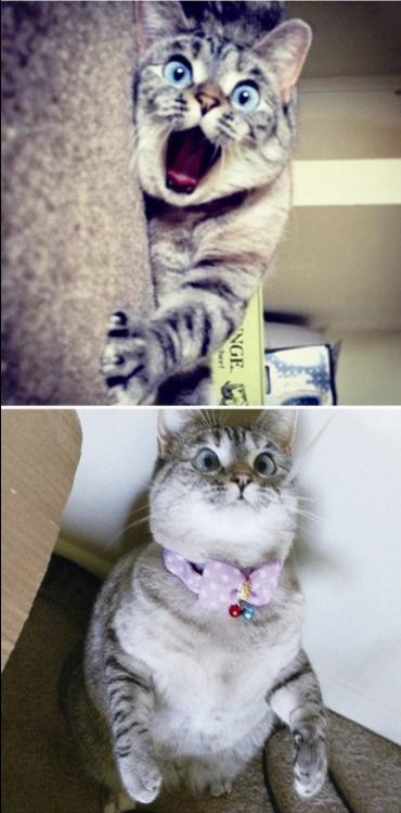 猫咪吧,凭着笑星般喜感的外表和一双晶晶亮的大眼睛
