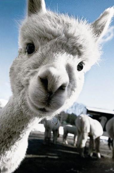 """去野生动物园看""""神兽"""" 安徽省今日教育集团 今日教育"""